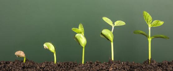 Pola pikir wirausaha terus tumbuh